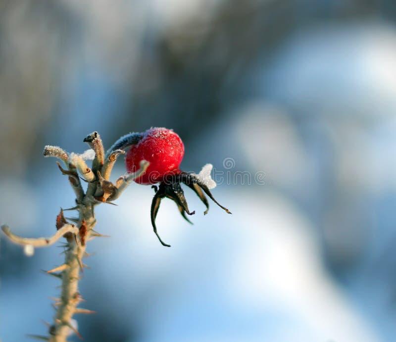 Gratte-cul rose surgelé photo stock