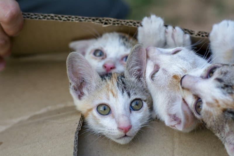 Grattez le groupe curieux de beaux petits chats domestiques de minou à b photographie stock libre de droits