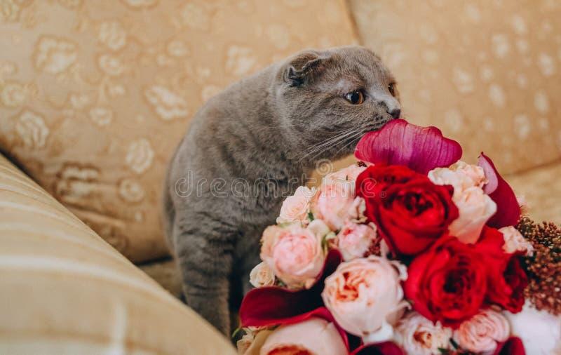 Graue große Katze auf der Couch einen Blumenstrauß schnüffelnd lizenzfreies stockbild