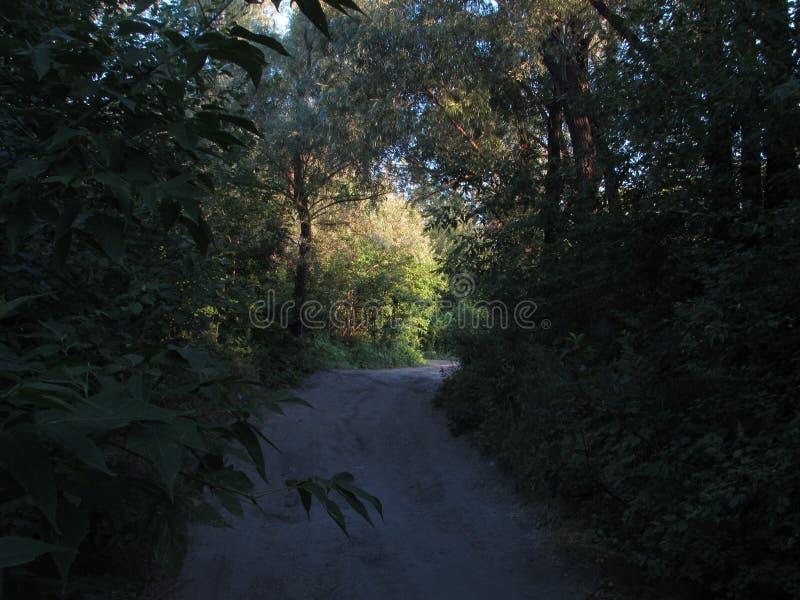 Graue helle Straße umgeben durch grüne Sommerbäume, -büsche und -gras mit einem hellen belichteten sonnigen Bereich lizenzfreies stockfoto