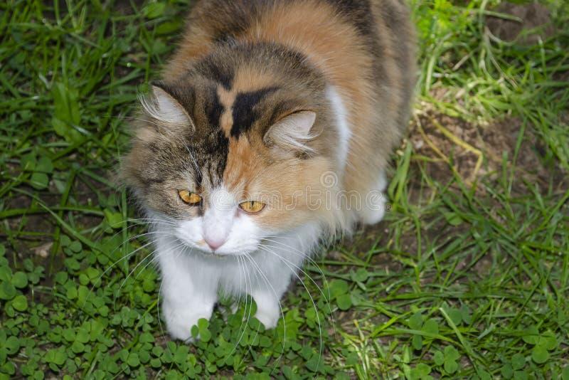Graue Kätzchen schlängeln sich wie eine wilde Katze zwischen den Dicketwurzeln stockbild