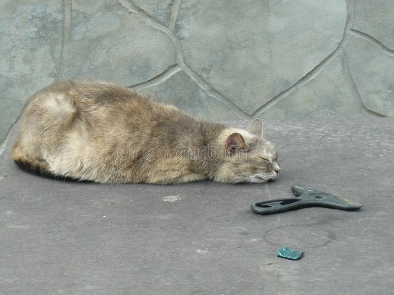Graue Katze, die auf dem Tisch schläft stockfotos