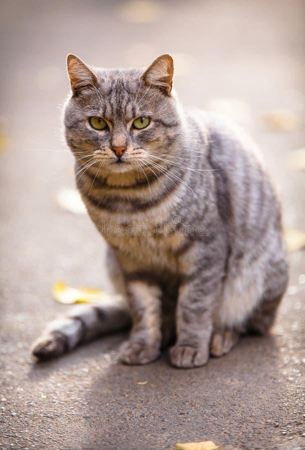 Graue Katze, die aus den Grund sitzt stockfoto
