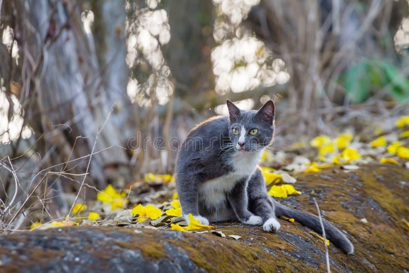 Graue Katze, die in einem Waldhintergrund sitzt stockfotografie