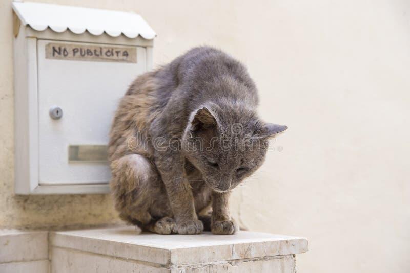 Graue Katze, die nahe Briefkasten sitzt stockfotografie