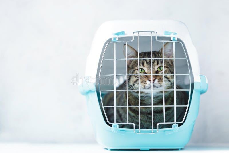 Graue Katze in einem Käfig für Transport Tragen für Tiere Verlegung und Tiertransportkonzept stockfoto