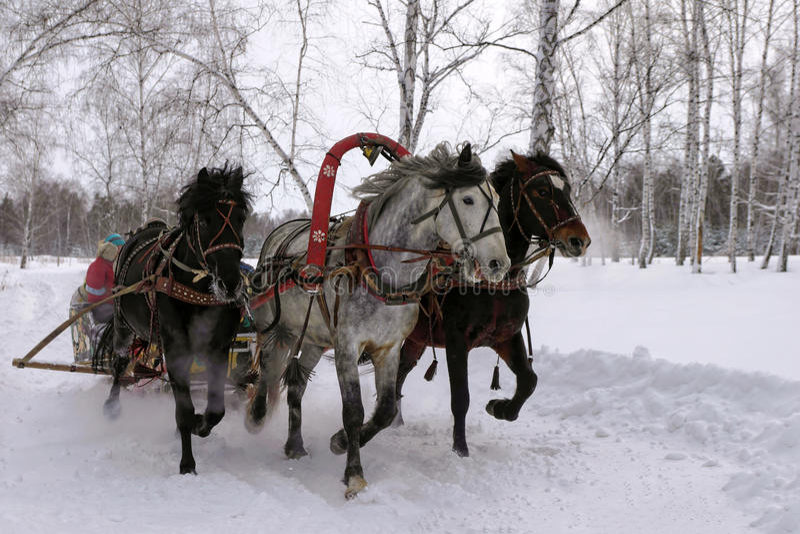 Graue russische Troika Weiße Pferde lizenzfreie stockbilder