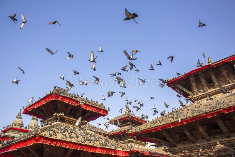 Graue Tauben, die auf den roten Dächern von alten asiatischen Tempeln sitzen und gegen einen sauberen blauen Himmel fliegen stockbild