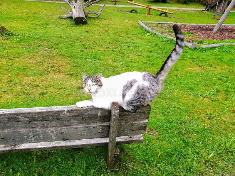 Graue und weiße Katze stockfotos