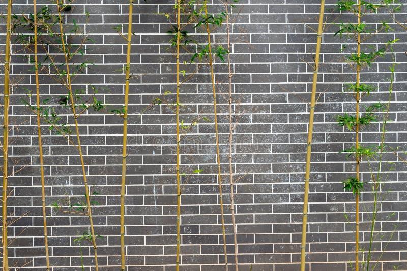 Graue weiße Backsteinmauer und grüner Bambus als Beschaffenheitsmusterhintergrund stockbilder