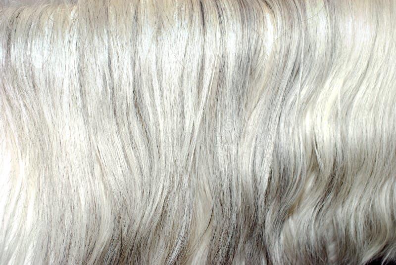 Grauer Mähnehaarhintergrund lizenzfreies stockbild