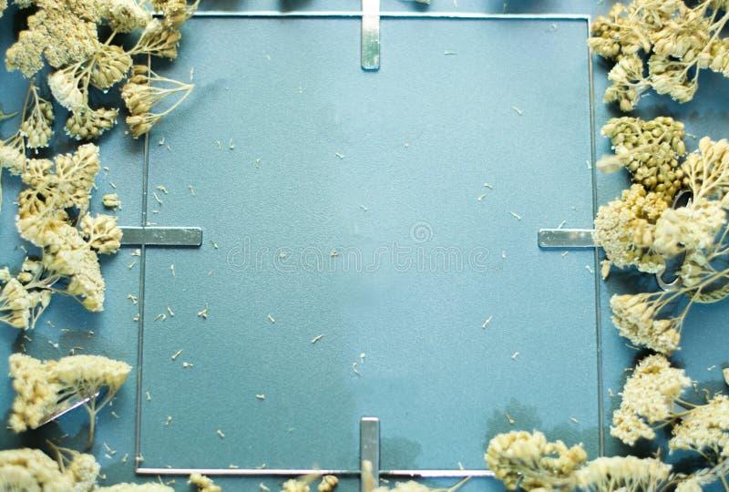 Grauer Rahmen mit Trockenblumen lizenzfreie stockbilder