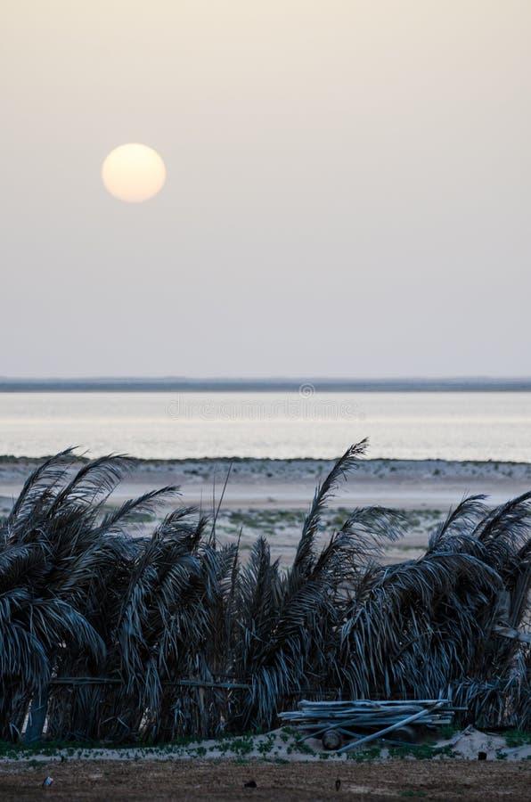 Grauer Sonnenuntergang über Atlantik und dunkles Palmblatt hegen in Nationalpark Gerichtsbank d ` Arguin, Mauretanien, Afrika ein lizenzfreie stockbilder