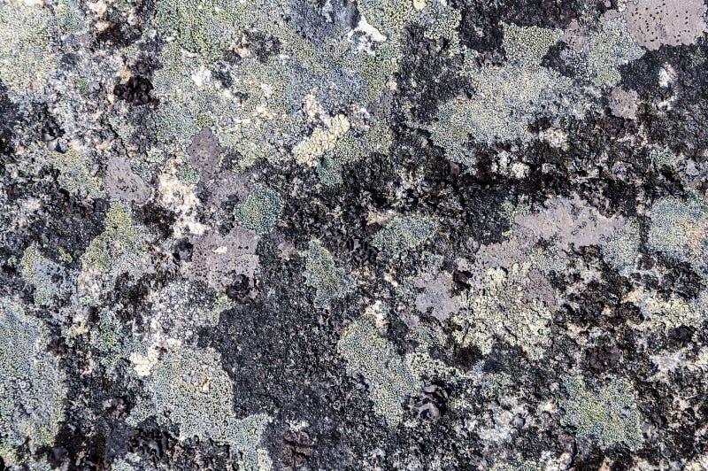 Grauer Stein mit crustose Flechtenbeschaffenheit lizenzfreie stockbilder