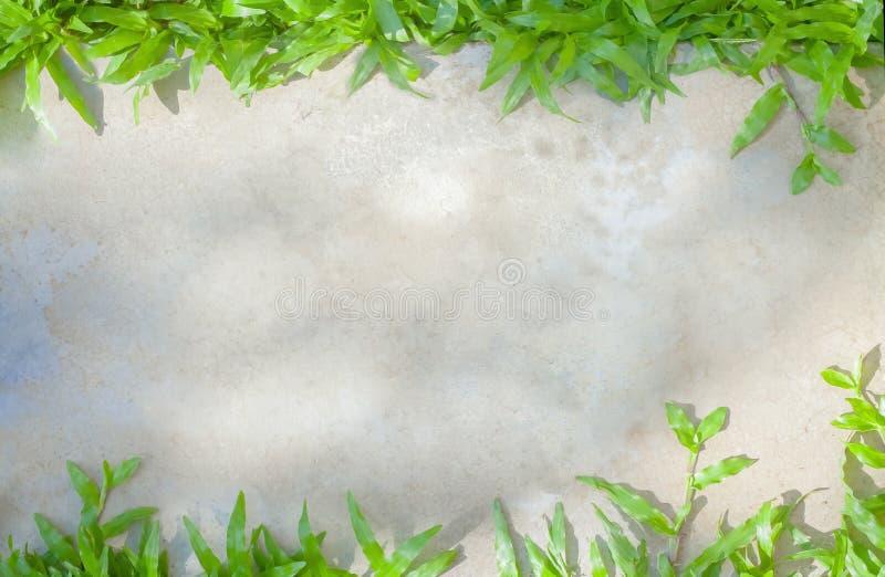 Grauer Zement der nahtlosen Beschaffenheit und Betondecke bedeckten grünes Gras Abstrakter Rahmenentwurf auf Polierhintergrund im stockfotografie