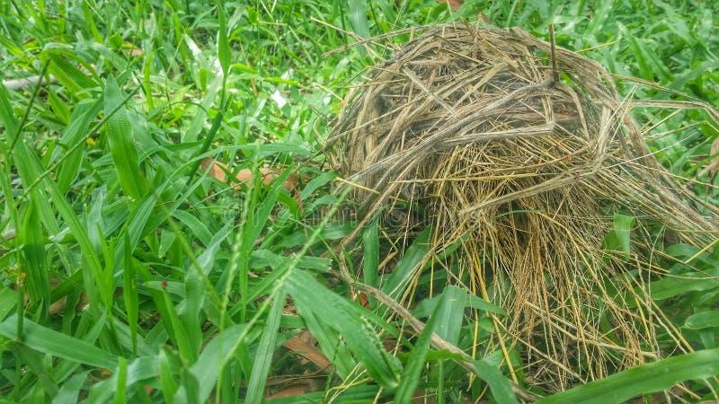graues Farbvogelnest auf dem grünen Gras lizenzfreies stockfoto