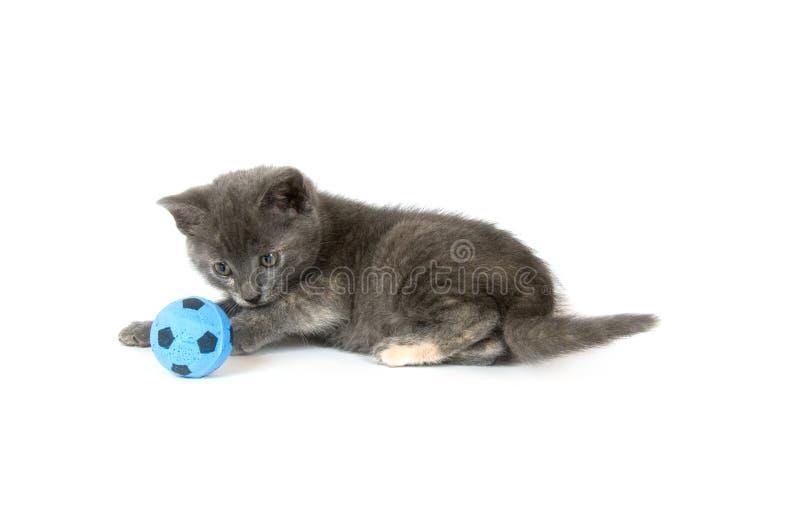 Graues Kätzchen, das mit Fußballkugel spielt lizenzfreies stockfoto