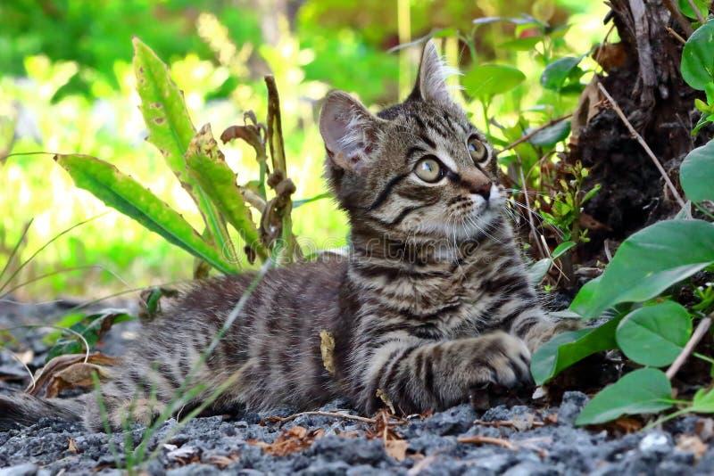 Graues Kätzchen, das sich unter einem Baum hinlegt lizenzfreies stockfoto