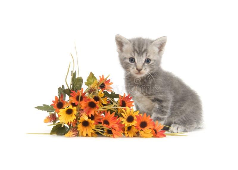 Graues Kätzchen und Blumen stockbild