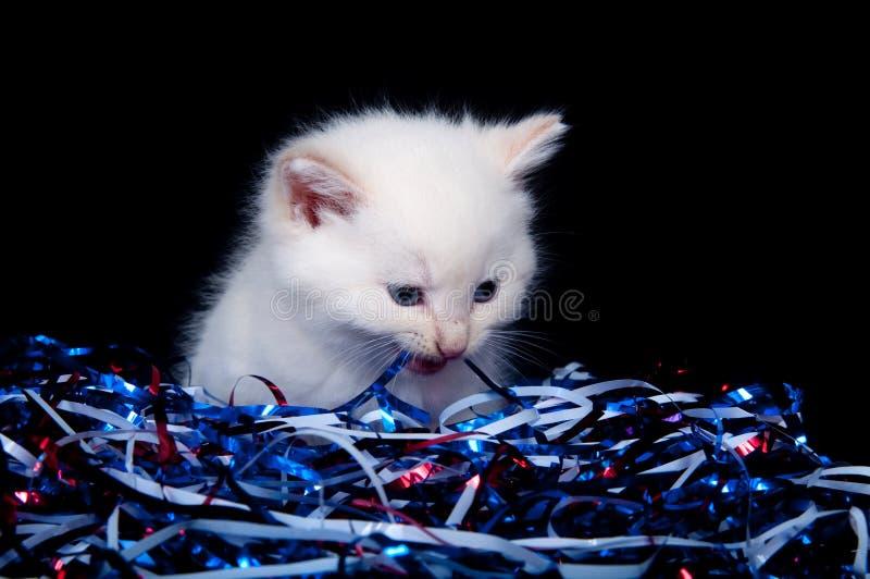 Graues Kätzchen und Viertel der Juli-Ausläufer stockfoto