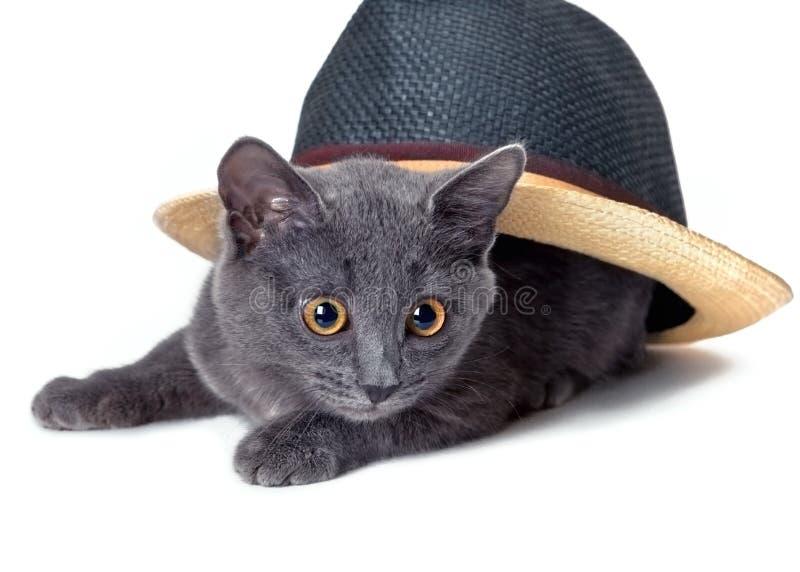 Graues Kätzchen unter dem Hut lizenzfreies stockbild