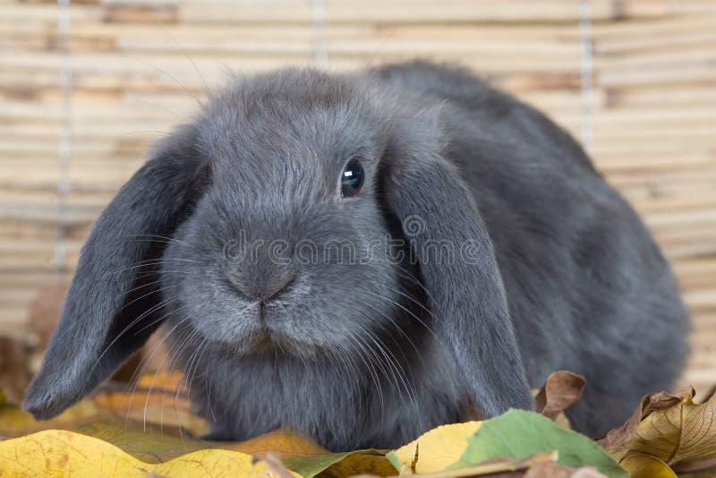 Graues Kaninchen stockfotografie