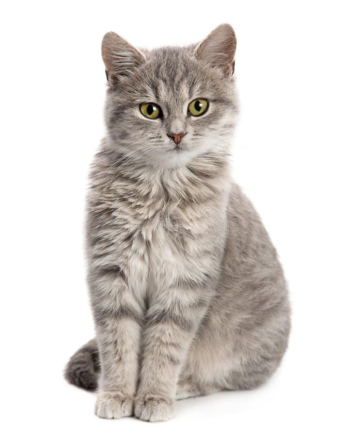 Graues Katzensitzen lizenzfreie stockfotografie
