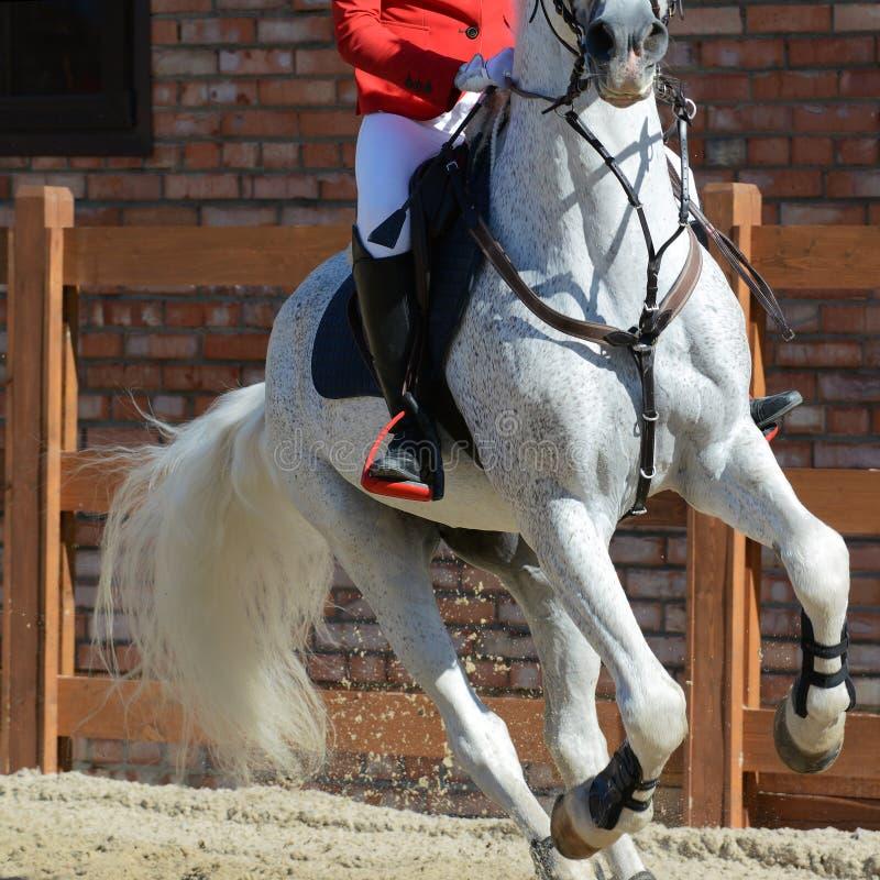 Graues Sportpferd und -reiter auf Galopp Pferdeshow, die ausführlich springt lizenzfreie stockfotos