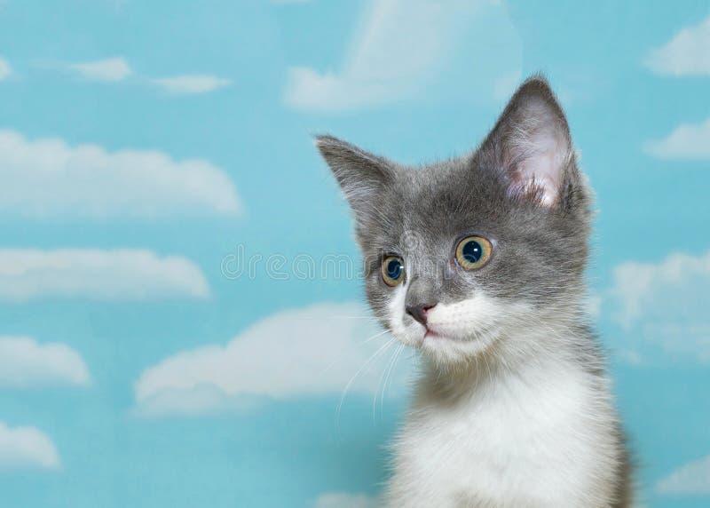 Graues und weißes der getigerten Katze Kätzchen des Porträts stockfotos