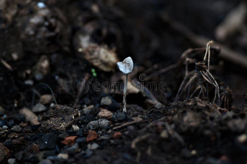 Grauliche weiße Pilzanlagen wachsen eingehangen stockbilder