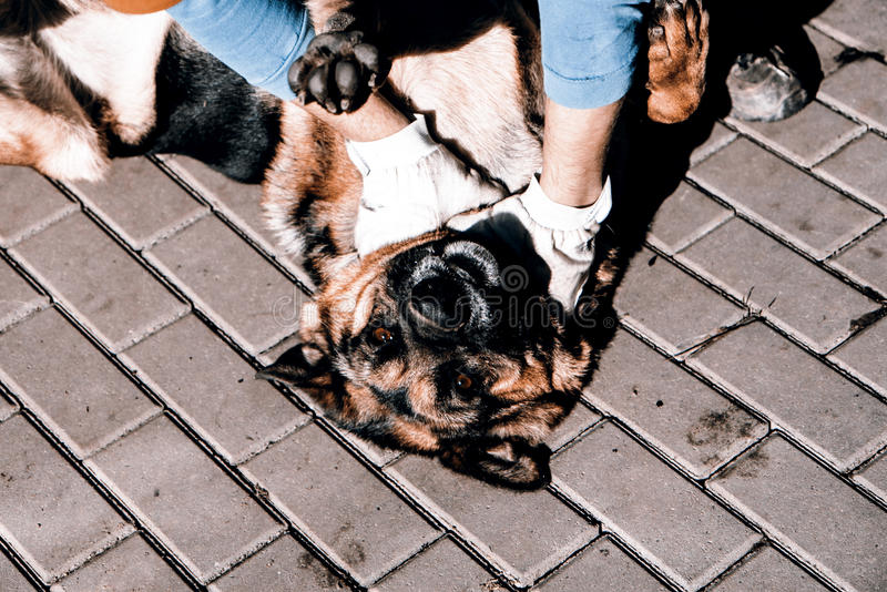 Grausamkeit zu den Tieren lizenzfreie stockfotografie