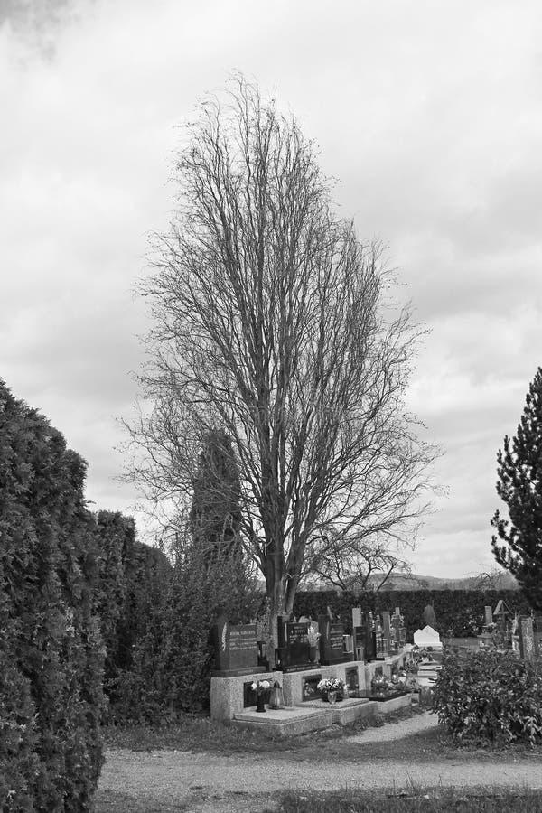 Gravar under det gamla trädet royaltyfria bilder