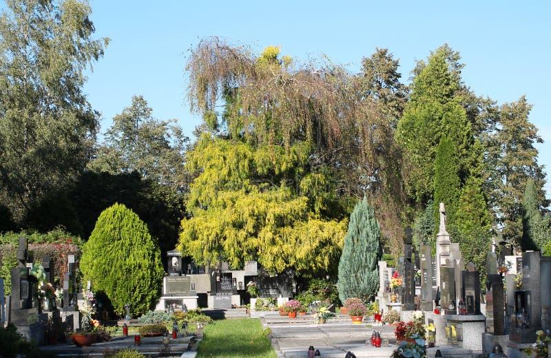 Gravar under träden royaltyfria foton