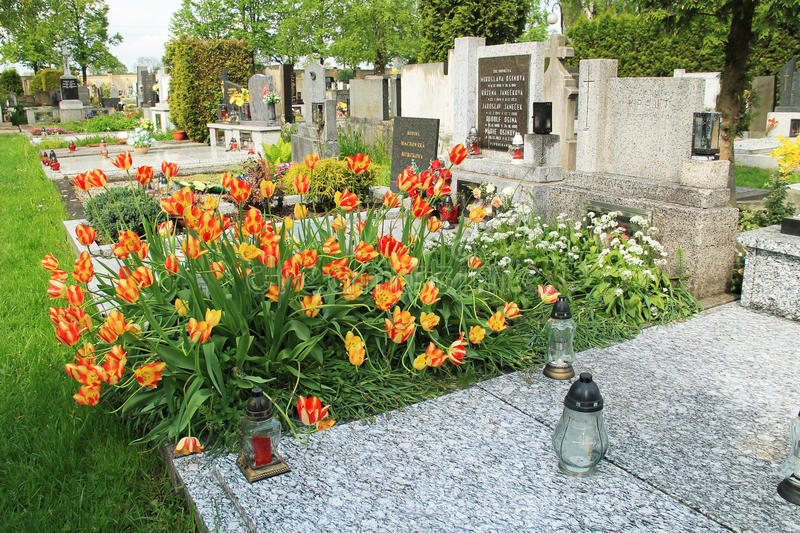 Grave covered with tulips royalty free stock photography