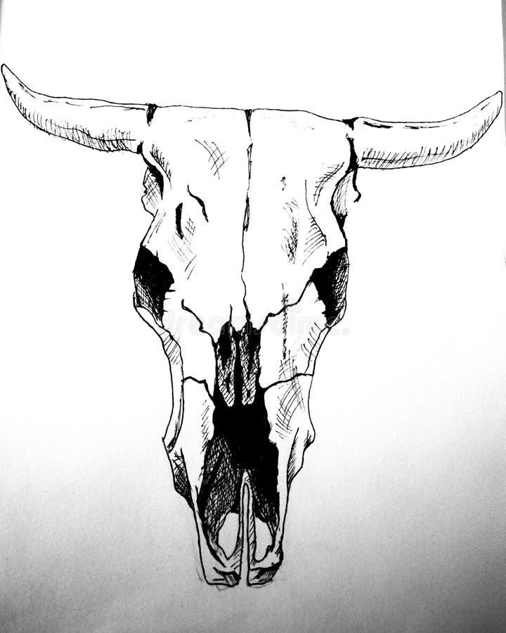 Graveer de getrokken grafische illustratie van de koeschedel hand Graveer getrokken grafisch de illustratieart. van de koeschedel stock afbeelding