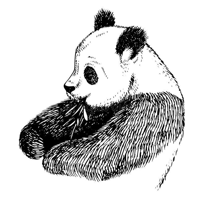 Graveer inkt trekken pandaillustratie vector illustratie