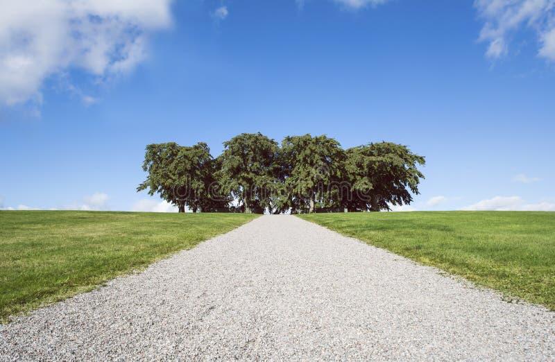 Gravel дорога к вязам на кладбище полесья, Стокгольм Всемирное наследие ЮНЕСКО стоковое фото