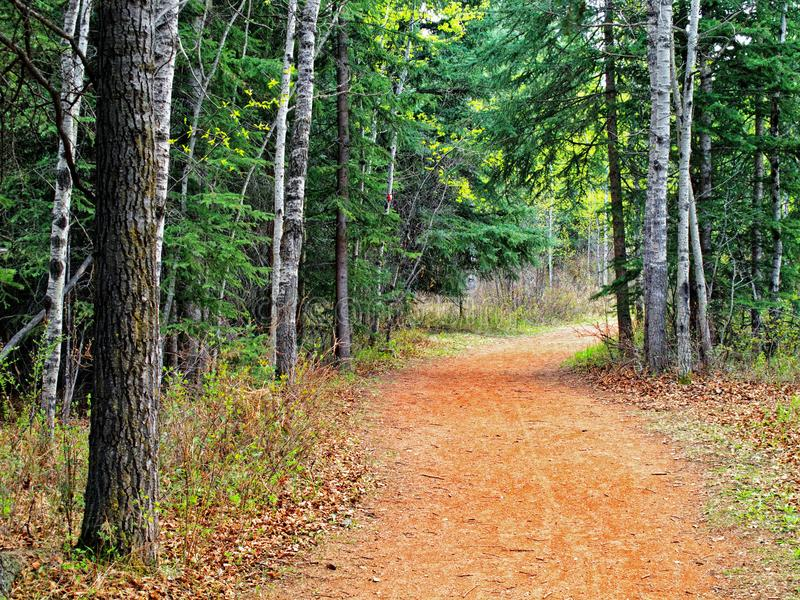 A gravel trail in the forest royalty free stock photography