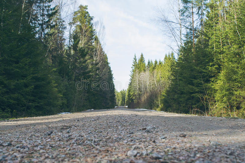 Gravel road in dense forest. In early spring royalty free stock image