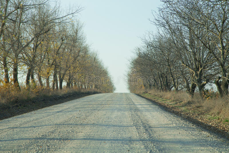 Gravel road through the forest stock photo