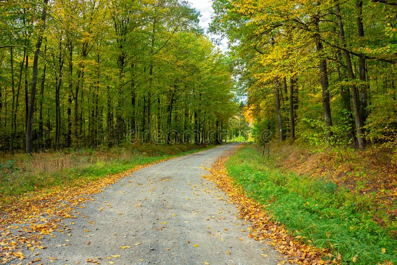 A gravel road through a forest with green and yellow leaves in eastern Poland royalty free stock image