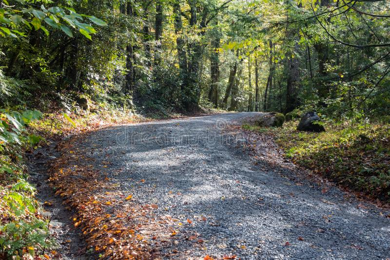 Gravel road leading into the woods on a sunny early autumn day, Great Smoky Mountains stock images