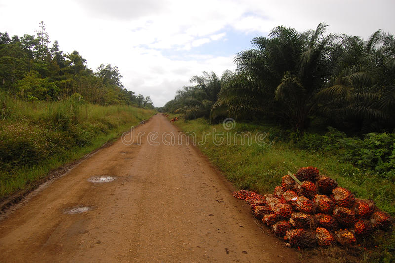 Download Gravel Road At Oil Palm Plantation Stock Photo - Image of palm, gravel: 33854466