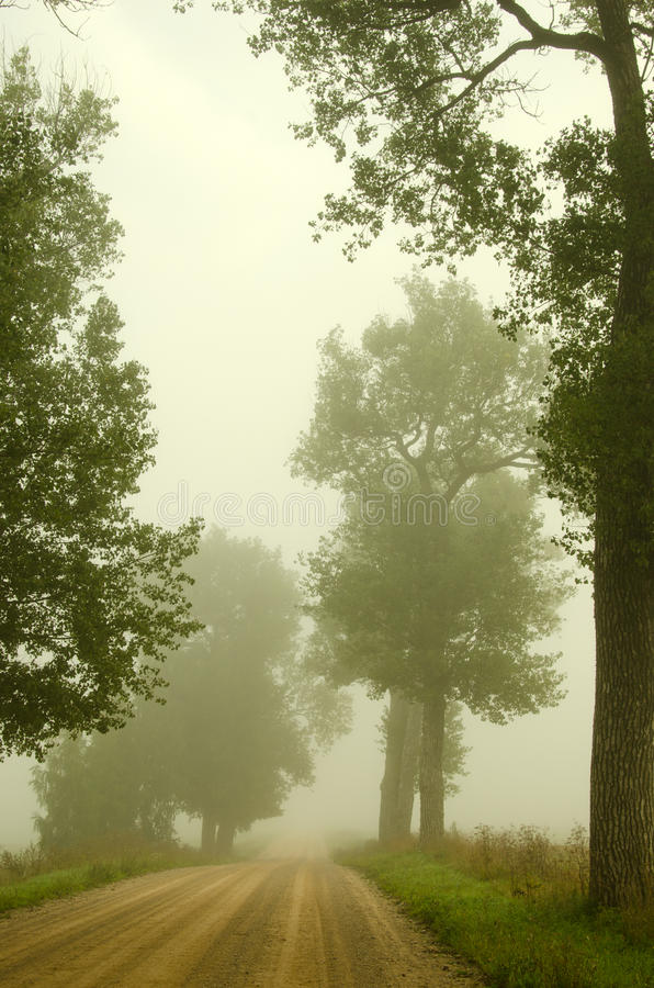 Download Gravel Road Old Trees Drown In Morning Fog Stock Photo - Image of horizon, road: 26035946