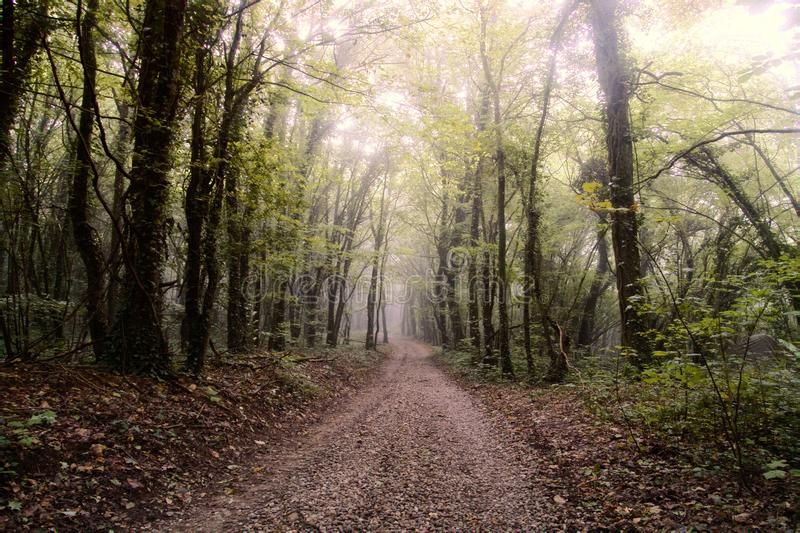 Gravel road through park. Forest road; forest track. Autumn maple forest, forest landscape with deserted road. Middle European region royalty free stock photos
