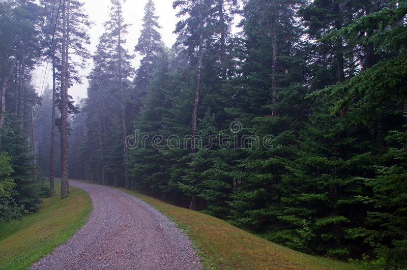 Gravel road in pine forest stock photo