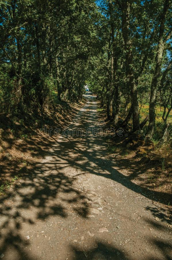 Gravel road shaded by lined trees. In a sunny day, passing by rural property near Marvao. An amazing medieval fortified village perched on a granite crag in royalty free stock photo
