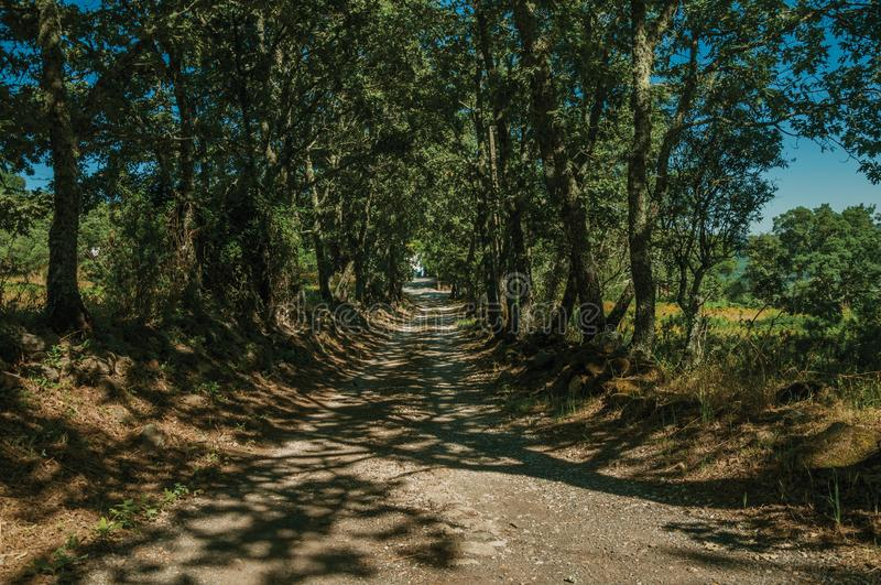 Gravel road shaded by lined trees. In a sunny day, passing by rural property near Marvao. An amazing medieval fortified village perched on a granite crag in royalty free stock image