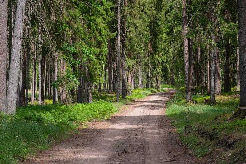 Gravel and sand road in the pine forest. Diminishing perspective of the path in the woods. Walking or driving through the trees on. The forrest road with green royalty free stock images