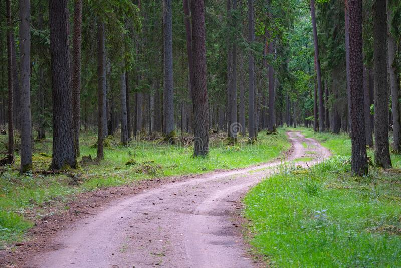 Gravel and sand road in the pine forest. Diminishing perspective of the path in the woods. Walking or driving through the trees on. The forrest road with green royalty free stock photography
